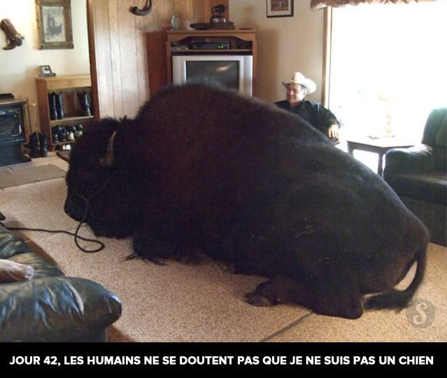 Le bison et l'homme aux santiags ou trois questions sur l'identité (3/3)