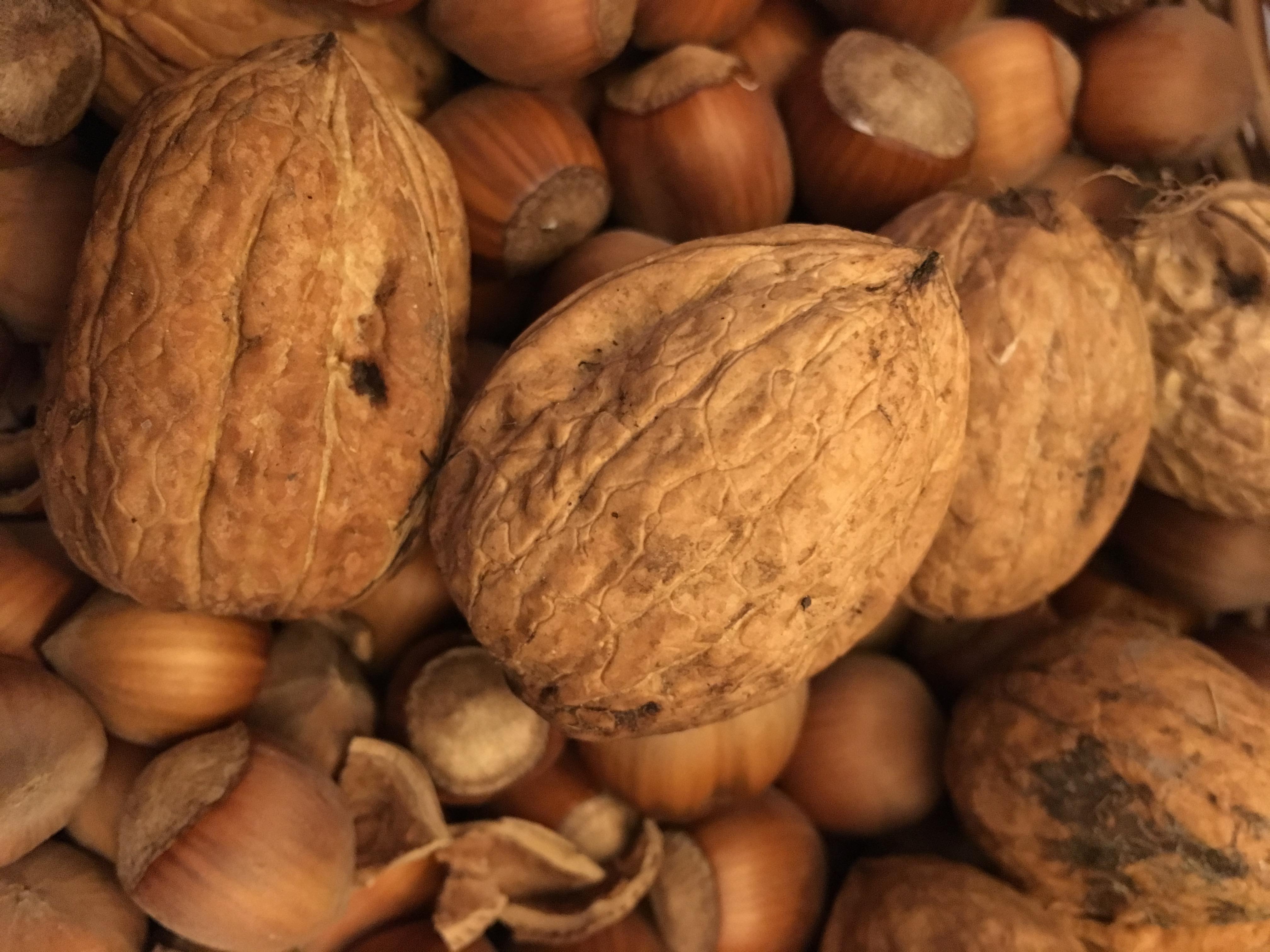 L'enfant à la coque de noix (partie 2)